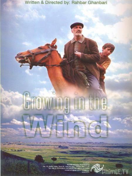 Ngọn Gió Yêu Thương
