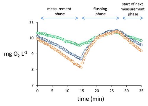 魚類の呼吸代謝 DO濃度の関係 時間変化
