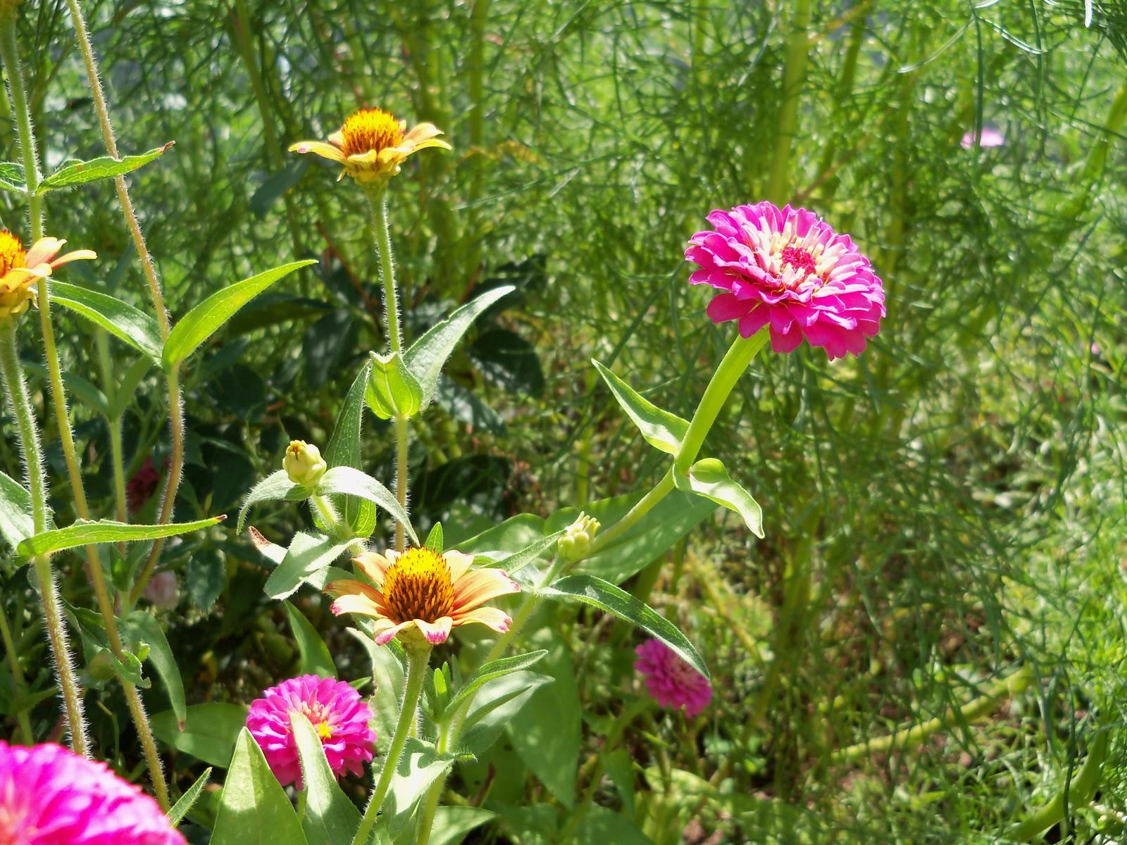 Gardening 2010, Part Three - 101_4392.JPG