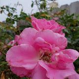 Gardening 2012 - 115_2002.JPG