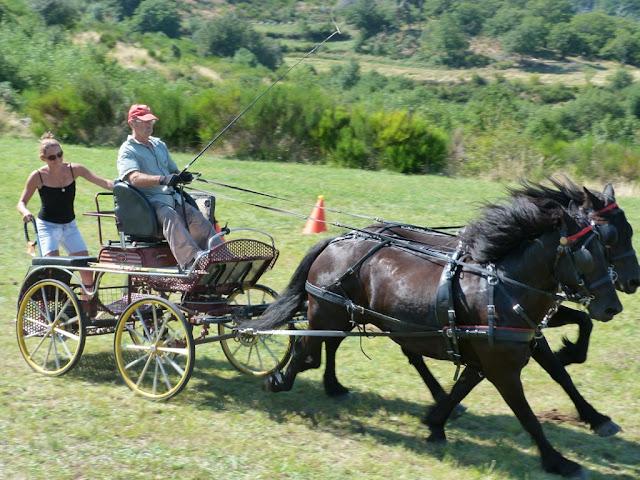 Fête du Haflinger les 16 et 17 aout 2013 a Ajoux (07) P1170184%2520%25281024x768%2529