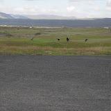 Golfkl Þorlákshafnar 20.07.11