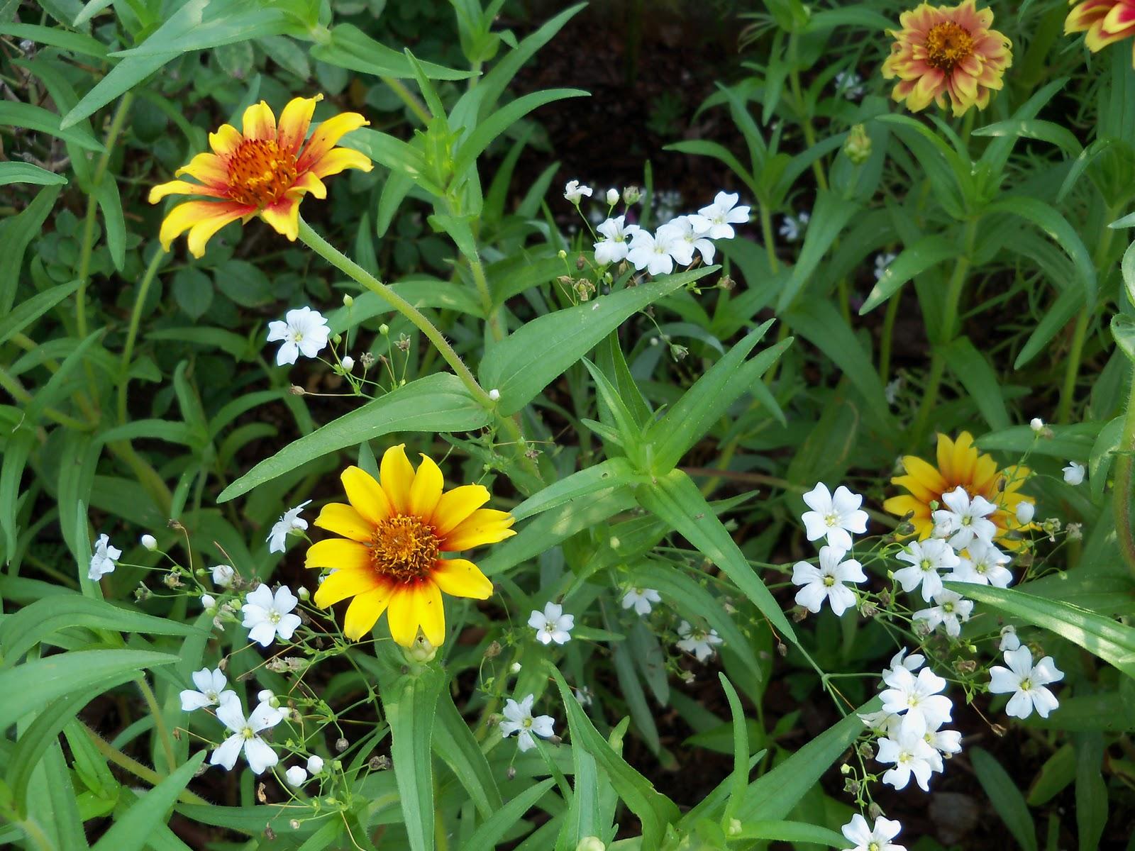 Gardening 2010, Part Two - 101_3302.JPG