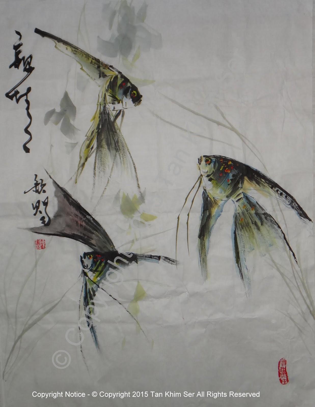 神仙鱼angel fish tankhimser