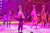 Bedrijfsreportage bij Circus Renz in Apeldoorn - 08