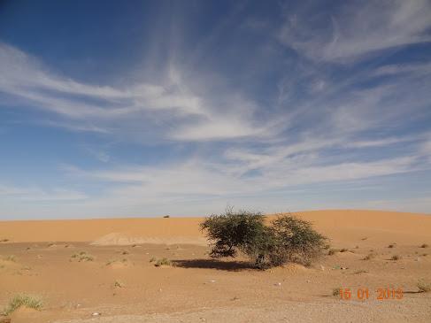Marrocos e Mauritãnia a Queimar Pneu e Gasolina - Página 7 DSC06061