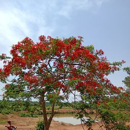 UdaySankar Roy