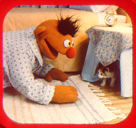 Ernie (from Sesame Street) and a kitten