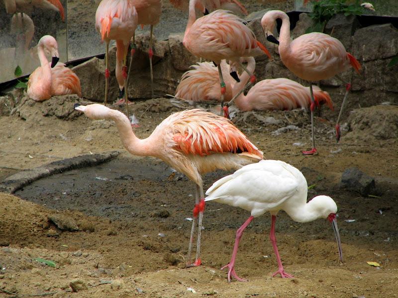 Warszawskie zoo - img_6219.jpg