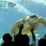 Hurghada-Grand-Aquarium.jpg