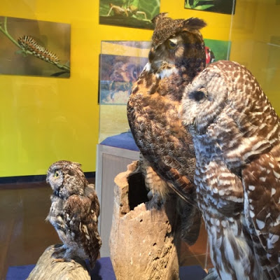 Owls in Critter Kingdom at Fort Worth Museum of Science and History