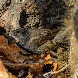 galapagos - Galapagos_FB_2-78.jpg