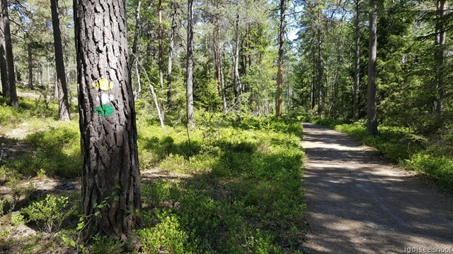Coloured paint in yellow, green or white marking the various trails at Nacka Nature Reserve.