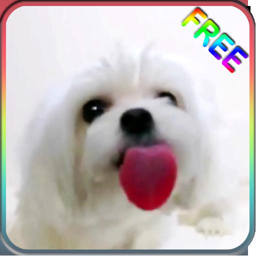 犬舐める画面ライブ壁紙 個人化 App LOGO-硬是要APP