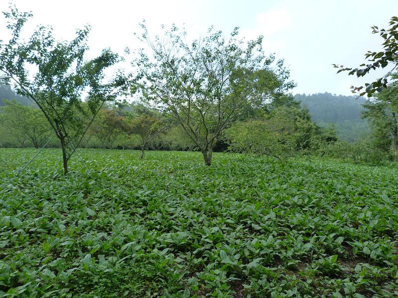 TAIWAN Dans la region de Wushe,au centre - P1140082.JPG