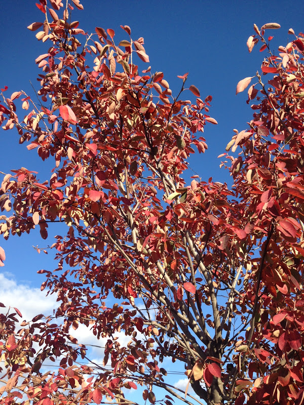 10/30/15 – a photo of the leaves against the sky.