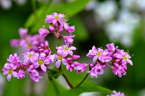 kham pha ban do hoa tam giac mach2 Khám phá bản đồ hoa tam giác mạch