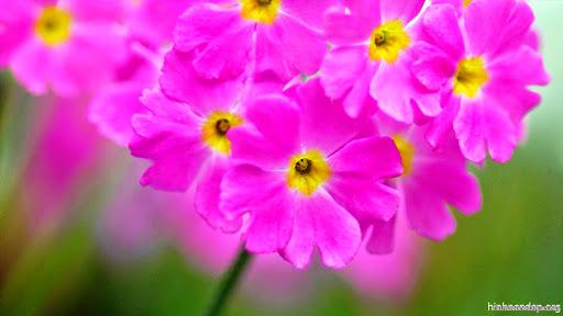 Hình Nền Hoa Mùa Xuân Lung Linh Trong Nắng