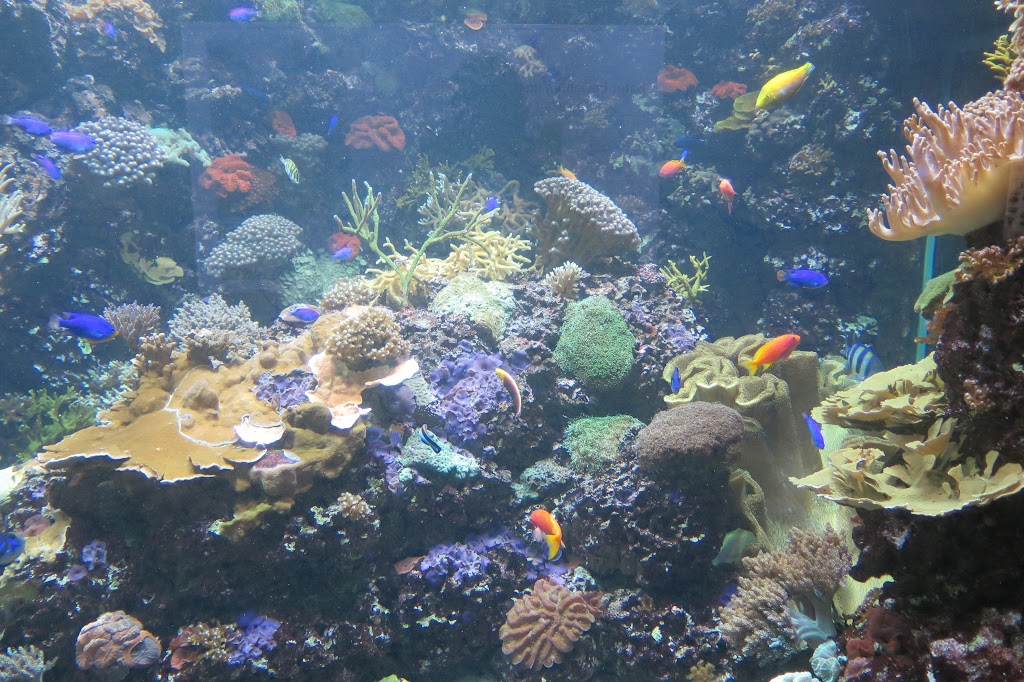 Die bunten Fische und Korallen sind sehenswert