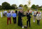 Tree to mark WW1 outbreak