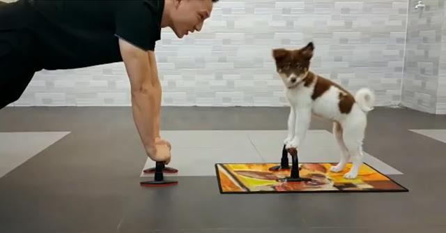 YouTube Videos Engraçados: Cão fofo faz flexões com o dono