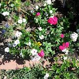 Gardening 2013 - IMG_20130413_110545.jpg