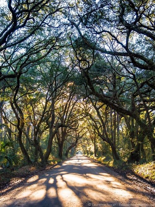 Oak avenue Botany Bay Charleston