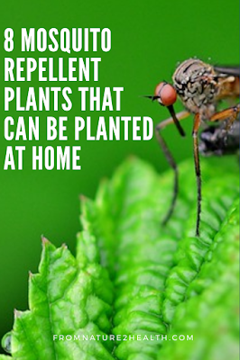 Mosquito Repellent Naturally