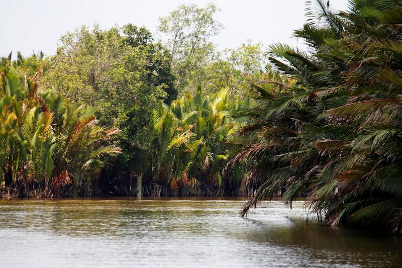 Las orillas del río en la jungla de Borneo