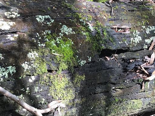 massive-trunk-2017-12-2-14-27.jpg