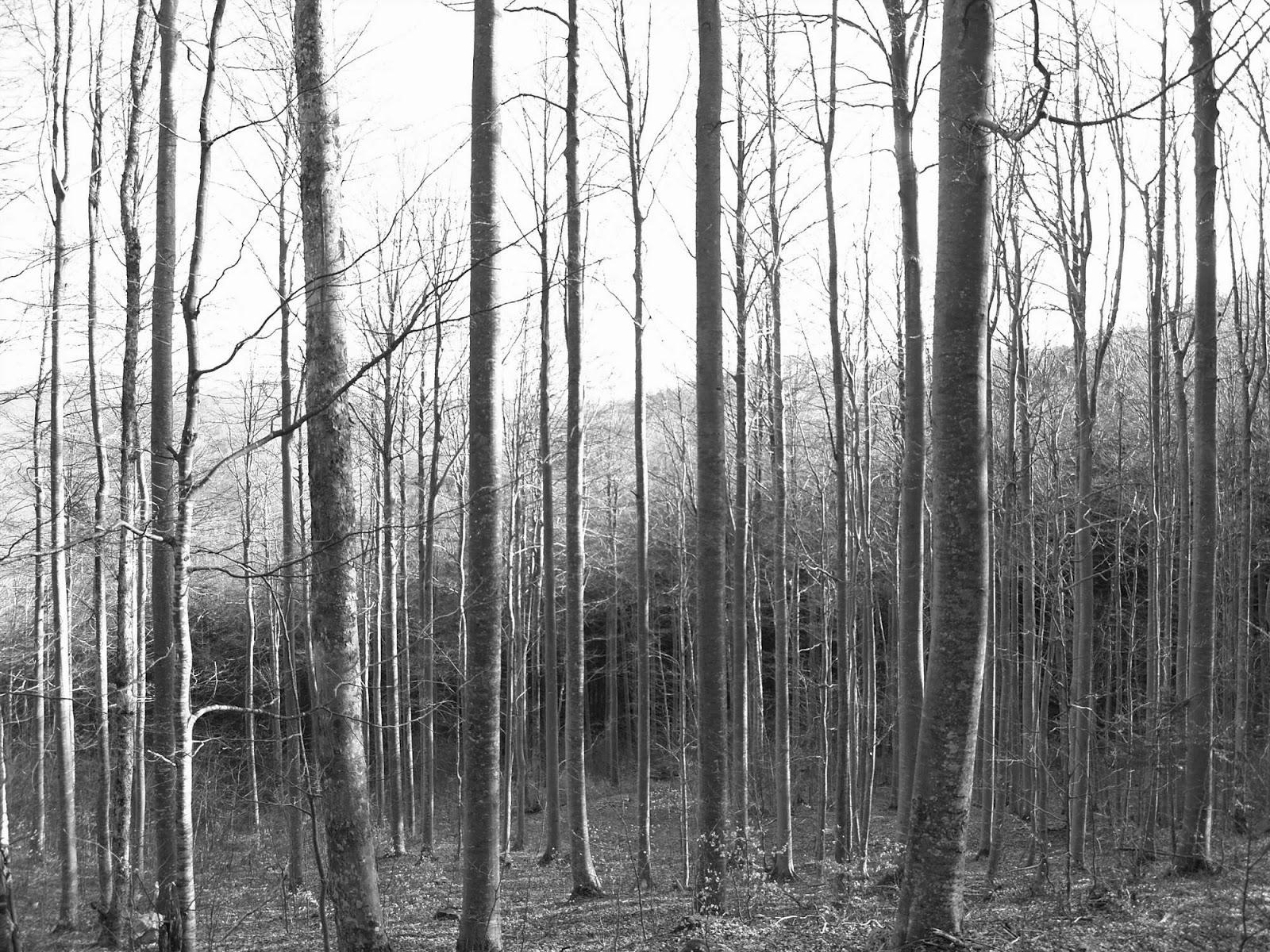Orientacijski vikend, Črni dol 2007 - P0166084.JPG