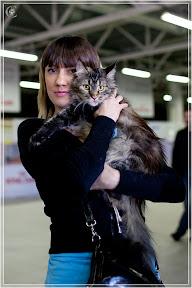 cats-show-25-03-2012-fife-spb-www.coonplanet.ru-021.jpg