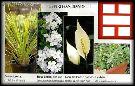 O-baguá-e-as-plantas-04