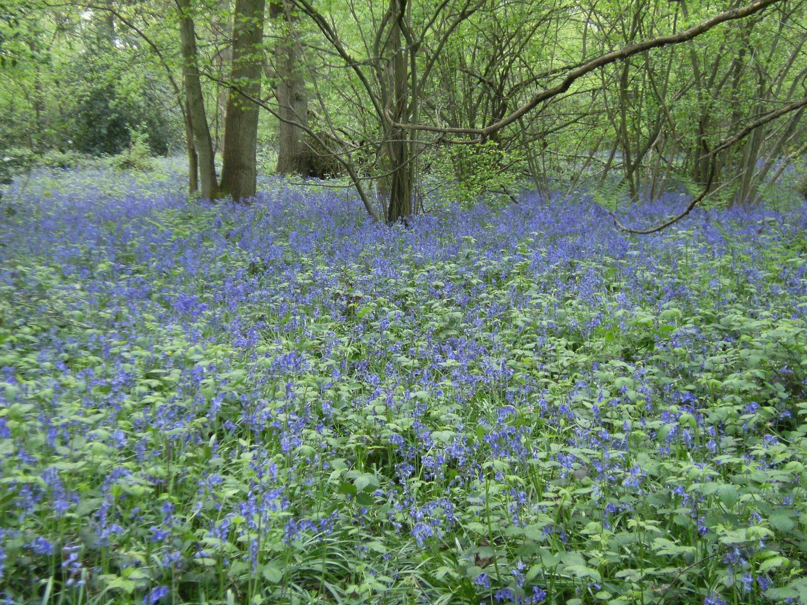 1005120095 Selsdon Wood