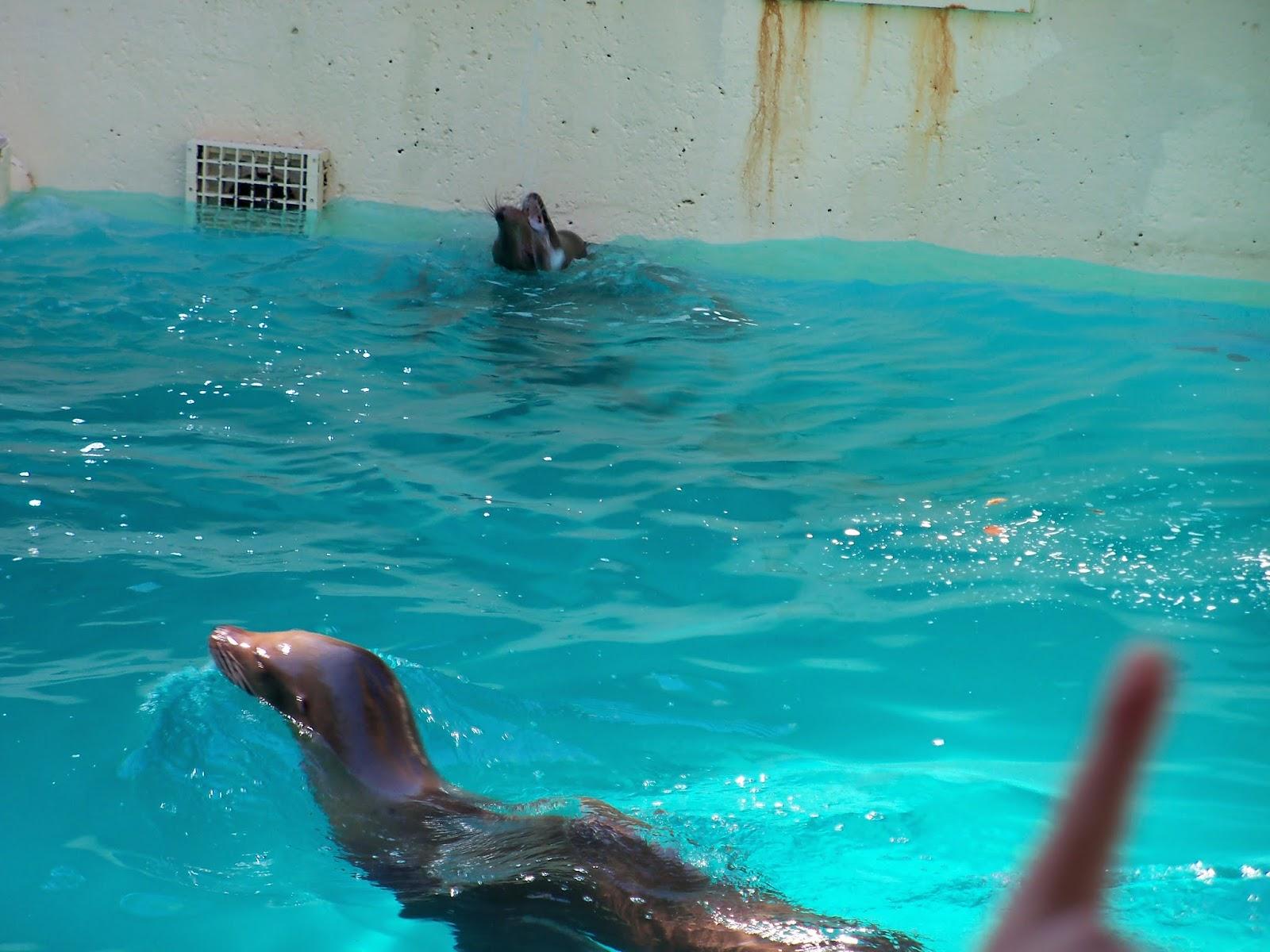 Houston Zoo - 116_8376.JPG