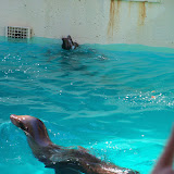 Houston Zoo - 116_8376.JPG