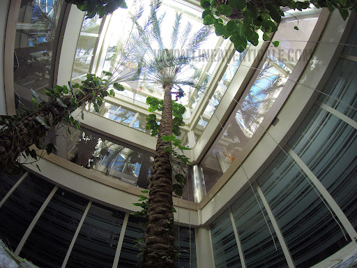 potatura piante d alto fusto linea verticale.jpg
