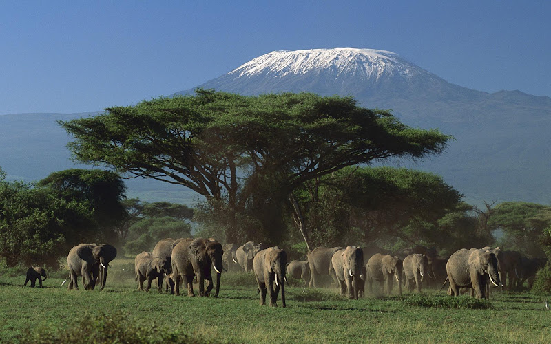 Kết quả hình ảnh cho tsavo west national park