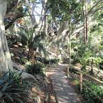 Mature trees make for interesting walking (258299)