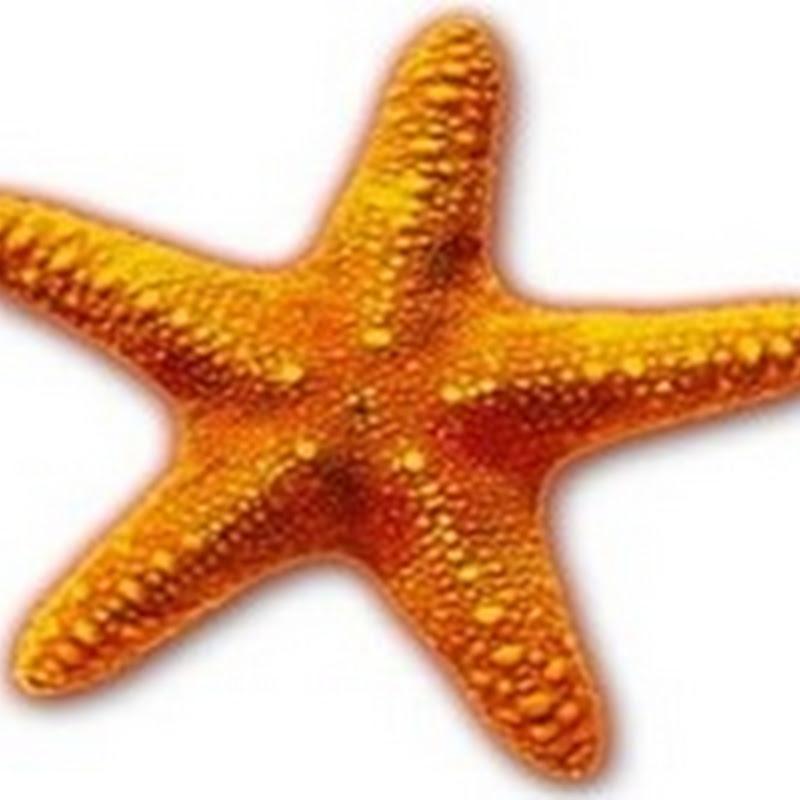 INFORMATION–STAR FISH CHARACTERISTICS | BIOZOOM