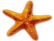 starfish-info