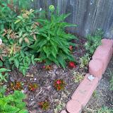 Gardening 2010, Part Two - 101_2568.JPG
