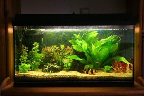 55-gallon-fish-tank