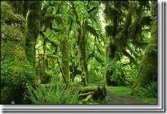 Tumbuhan Lumut (Bryophyta) 7