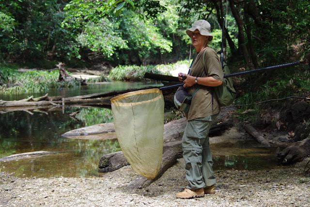 Crique Anguille. Bagne des Annamites (Guyane), 19 novembre 2012. Photo : J.-M. Gayman