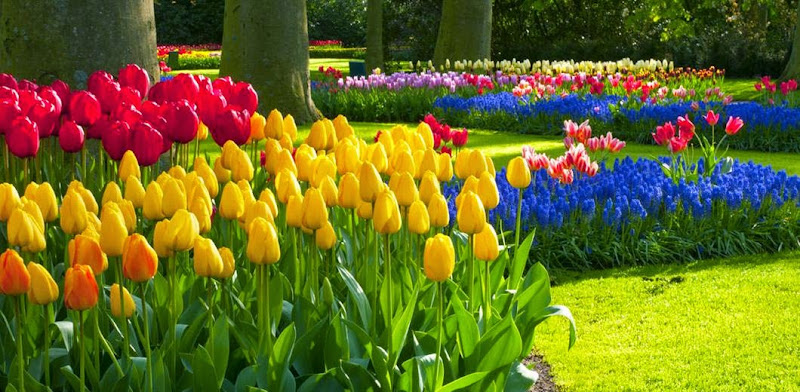 external image milton-park-beautiful-flowers.jpg
