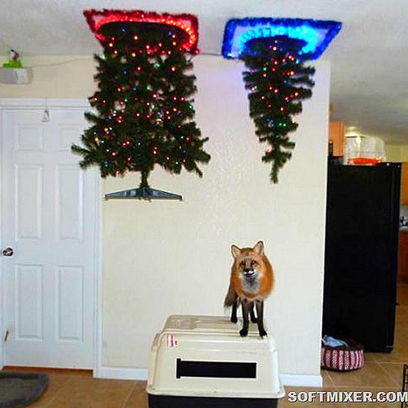 Как выглядят новогодние ёлки в домах людей, у которых есть питомцы