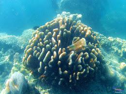 family trip pulau harapan, 1-2 agustus 2015 gopro 14