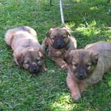 fotos perros 027.jpg