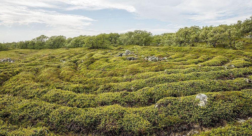 bolshoi-zayatsky-labyrinths-2